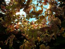 Orchidee nel cielo Fotografie Stock Libere da Diritti