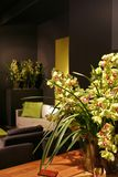 Orchidee nell'interiore Immagine Stock Libera da Diritti