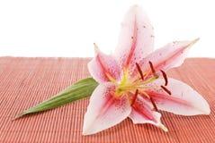 Orchidee op Bamboe Stock Foto