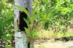 Orchidee op boomstam van boom stock afbeelding