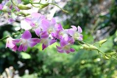 Orchidee op de tuinachtergrond Royalty-vrije Stock Afbeeldingen