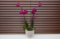 Orchidee op een venster Royalty-vrije Stock Fotografie