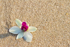 Orchidee op het zand royalty-vrije stock foto