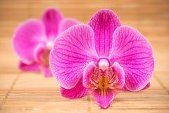 Orchidee op houten achtergrond Stock Afbeeldingen