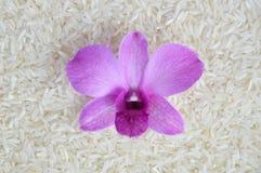 Orchidee op rijst Stock Afbeeldingen