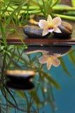 Orchidee op stenen Stock Afbeeldingen