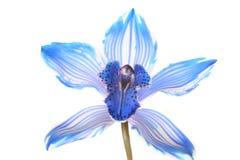 Orchidee op wit royalty-vrije stock foto