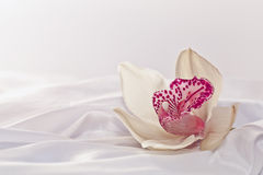 Orchidee op witte zijde royalty-vrije stock afbeeldingen