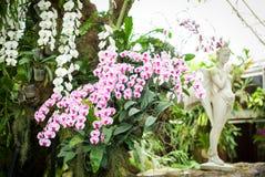 Orchidee porpora e bianche Immagini Stock