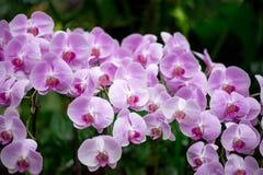 Orchidee porpora pastelli sul fondo scuro della foresta fotografia stock