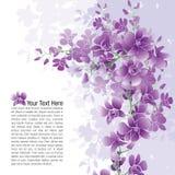 orchidee purpurowe Zdjęcie Stock