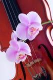 Orchidee ramoscello e violino Fotografie Stock