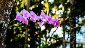 Orchidee rosa Fotografia Stock Libera da Diritti