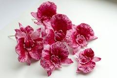 Orchidee rosa dolci per i precedenti di bianco del primo piano del dolce Fotografia Stock