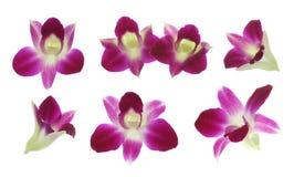 Orchidee rosse Fotografia Stock Libera da Diritti