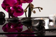 Orchidee rosse Fotografie Stock