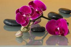 Orchidee rosse Immagine Stock Libera da Diritti