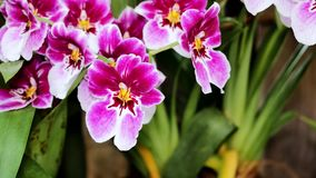 Orchidee rosse nel giardino video d archivio