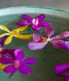 Orchidee-Schüssel lizenzfreie stockfotos