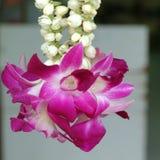 Orchidee sprzedawać przy Campbell pasem ruchu Fotografia Royalty Free