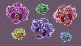 Orchidee su fondo Immagine Stock