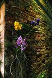 Orchidee su una parete in una serra Fotografia Stock Libera da Diritti