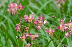 Orchidee a terra Fotografia Stock