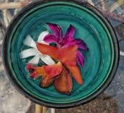Orchidee tricolori Immagini Stock Libere da Diritti