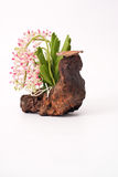 Orchidee und Bauholz Lizenzfreies Stockbild