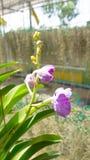 Orchidee und Blatt Stockbilder