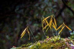 Orchidee und Blumen Lizenzfreies Stockfoto