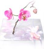 Orchidee und Geschenk Lizenzfreie Stockfotografie