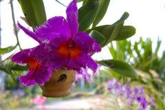 Orchidee und Hintergrund Stockfotografie