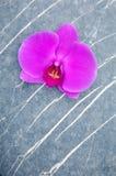 Orchidee und Stein Stockfotografie