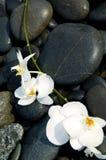 Orchidee und Stein Stockfoto