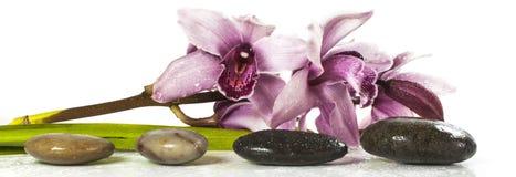 Orchidee und Steine Stockfotos