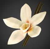 Orchidee- und Vanillebohnen mit Ausschnittspfad Lizenzfreies Stockfoto