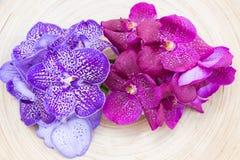 Orchidee Vanda na drewnianym półkowym odgórnym widoku Obrazy Stock
