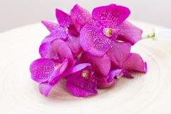 Orchidee Vanda na drewnianym talerzu Obraz Royalty Free