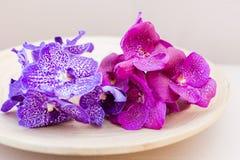 Orchidee Vanda na drewnianym talerzu Zdjęcia Stock