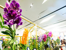 Orchidee variopinte nel paradiso 2014 dell'orchidea di Bangkok del modello Fotografie Stock Libere da Diritti