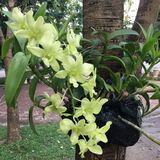 Orchidee verdi Fotografie Stock