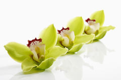 Orchidee verdi in una fila Fotografia Stock Libera da Diritti