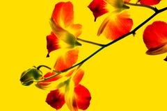 Orchidee volledige kleur royalty-vrije stock afbeelding