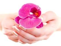 Orchidee in vrouwenhanden Royalty-vrije Stock Afbeeldingen