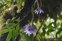 Orchidee w drzewie Zdjęcie Stock