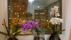 Orchidee w nocy zdjęcia royalty free