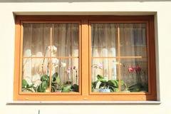 Orchidee w okno Obraz Stock