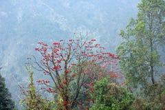Orchidee w pełnym kwiacie blisko Pelling, Sikkim, India Obraz Royalty Free