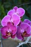 Orchidee in wildem lizenzfreie stockfotografie